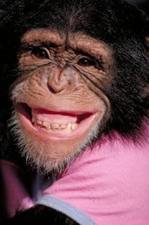 the chimp's Photo